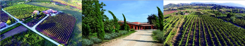 Azienda Agricola Alberto Giacobbe